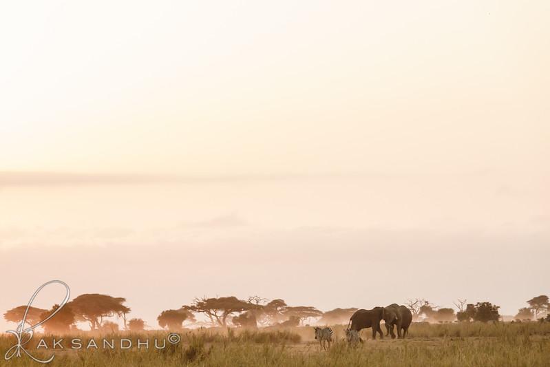 SunInAfrica-020.jpg