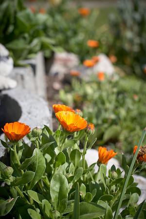 Virágok apámék kertjéből - Flowers from my Dad's garden