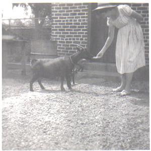 Clarisse medina com a cabra Joana no quintal da Picking