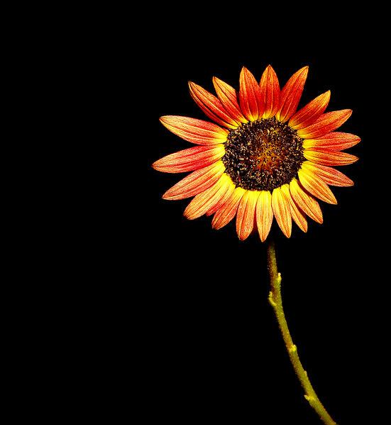 sun_001.jpg