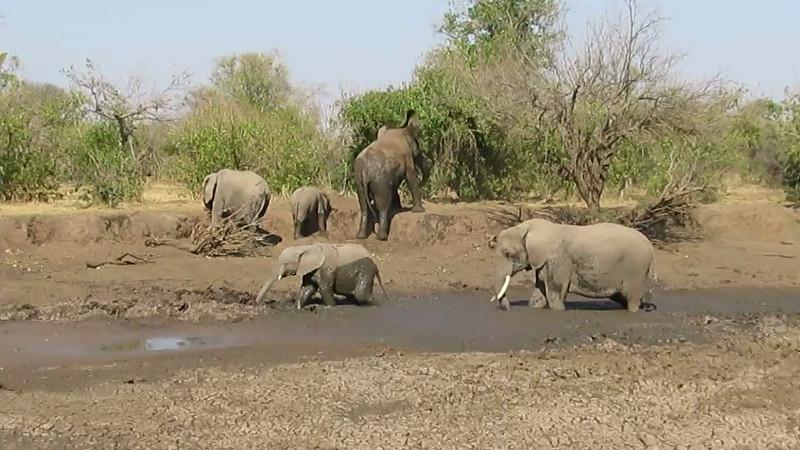 Mashatu Botswana Video