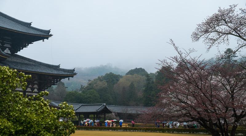 Nara Day 5 (216 of 374).jpg