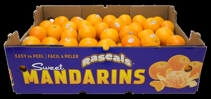 Mandarins Master 33lb
