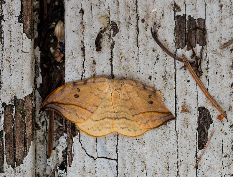 Butterfly 35.jpg