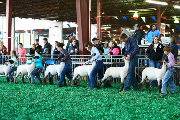 Prospect Lambs