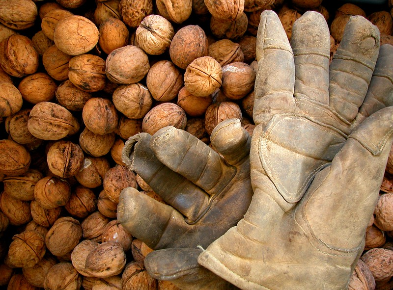 Walnut and gloves 1148.jpg