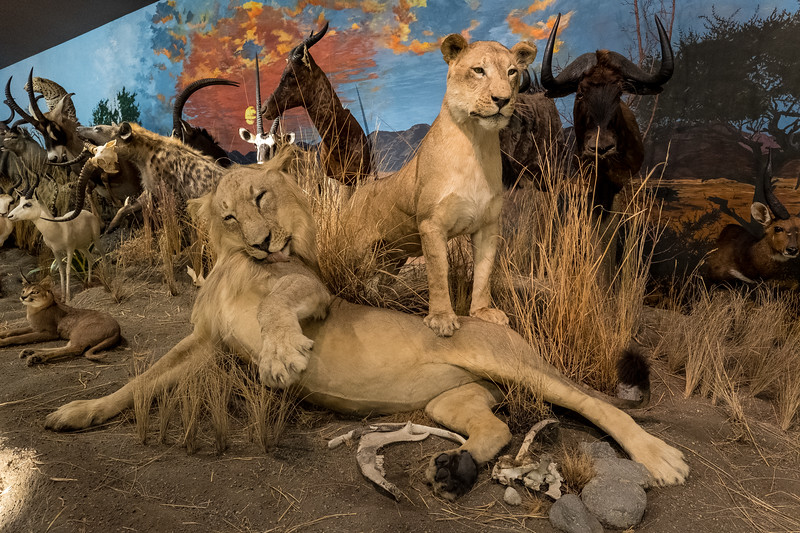 "The ""Chester Mjolsness World of Wildlife"" Exhibit"