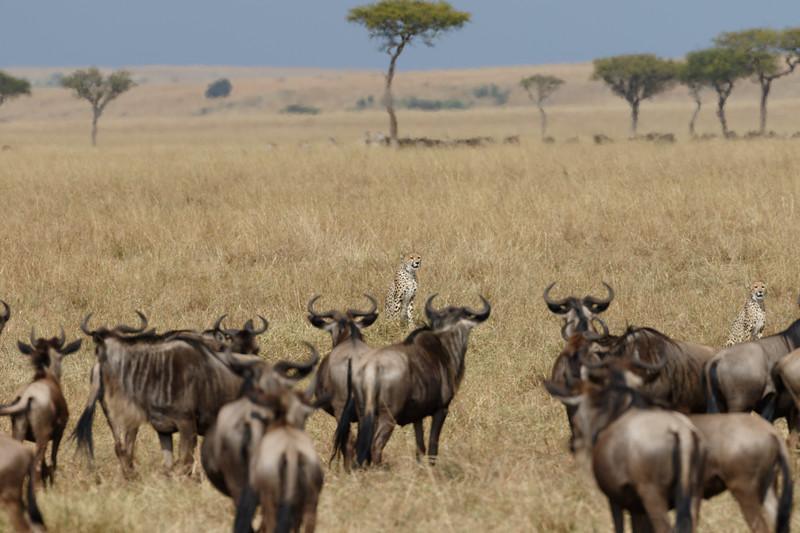 Kenya 2015-07239.jpg