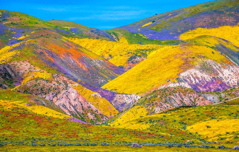 Carrizo Plain National Monument Wildflowers Superbloom Spring Symphony 24!  Elliot McGucken Fine Art Landscape Nature Photography Prints & Luxury Wall Art