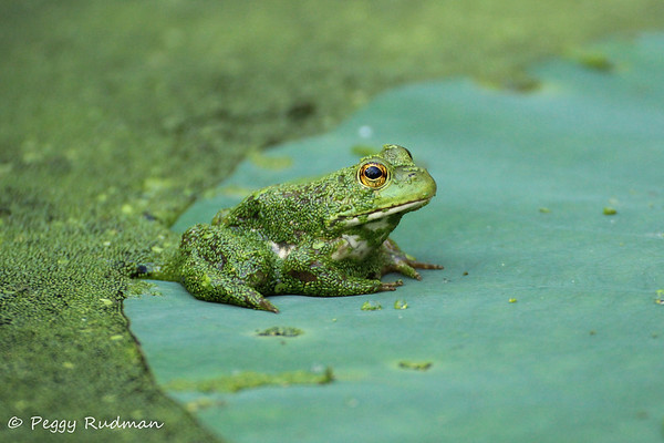 Flowers, Insects, and Frogs