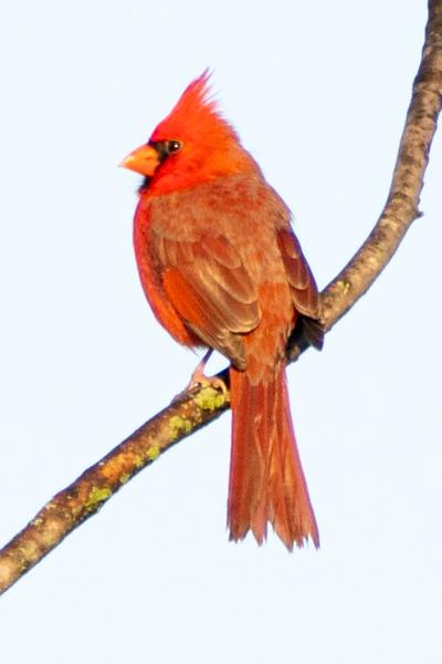 Bird Walk-08854.jpg