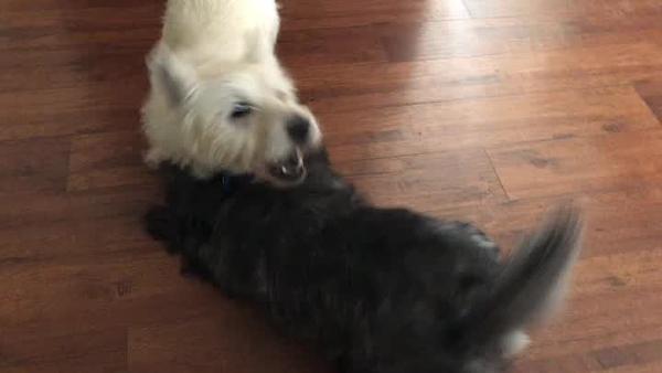 Milo's World Weston and Nova sings