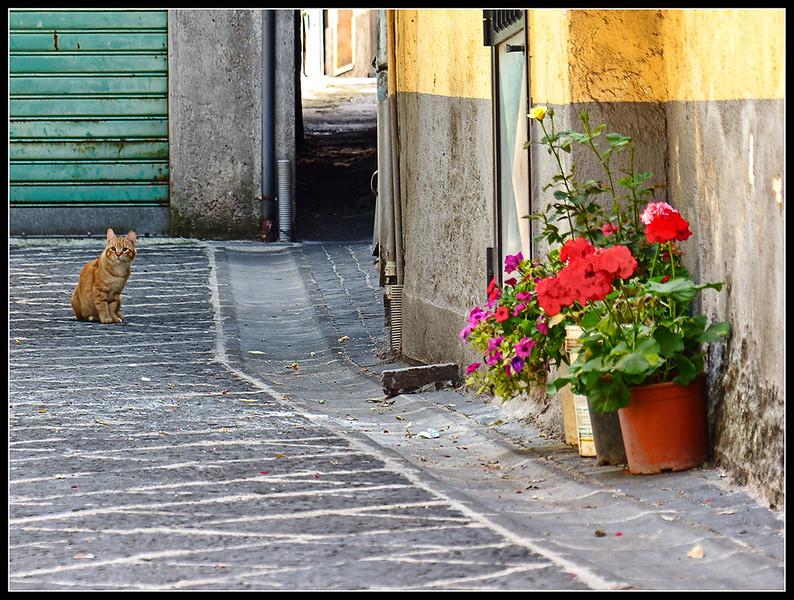 2015-06-Teggiano-102.jpg