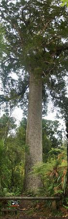 Cascade Kauri Park