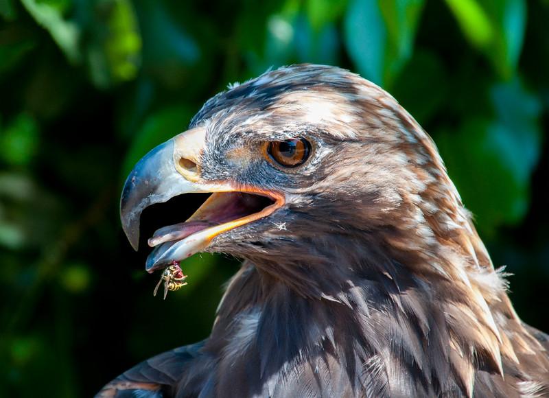 Eagles_Catalina-9.jpg