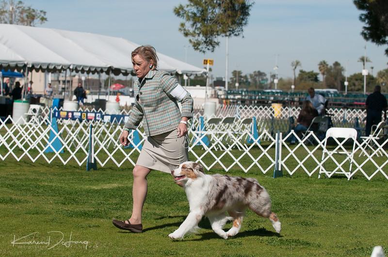 20170205_Australian Shepherds_Lost Dutchman Kennel Club-212.jpg