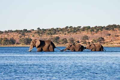 Kubu Lodge/Chobe National Park