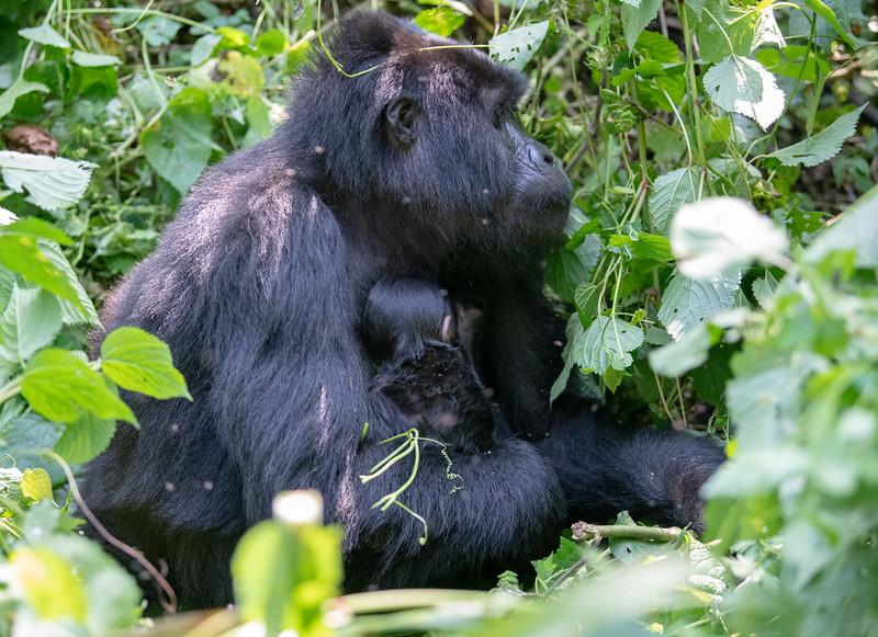 Uganda_T_Gor-1061.jpg