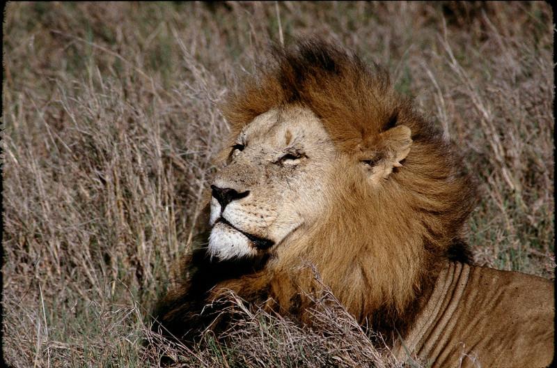 Kenya2_063.jpg