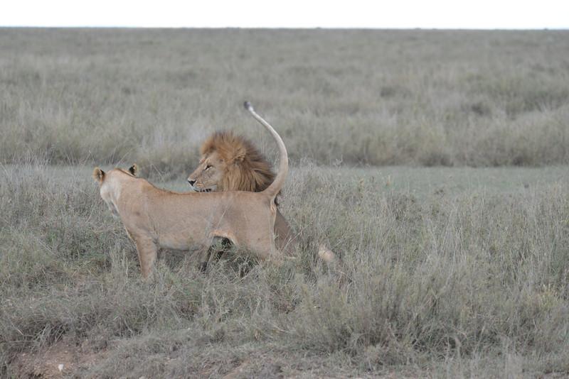 East Africa Safari 276.jpg
