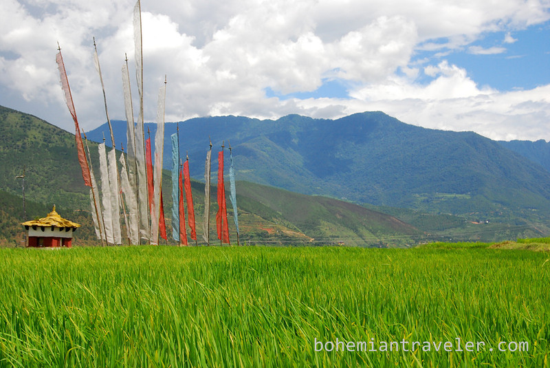 prayer flags at rice paddies around Divine Madman temple Bhutan.jpg