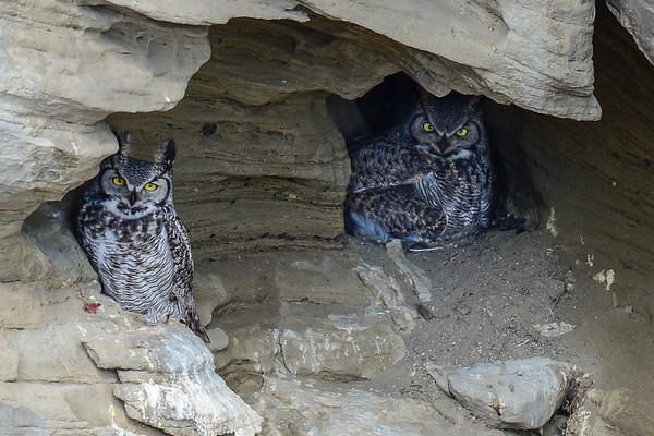 4 2013 Apr 18 Update!  Owl In a Cave Update