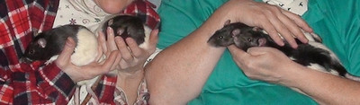 Snuggle with Rats