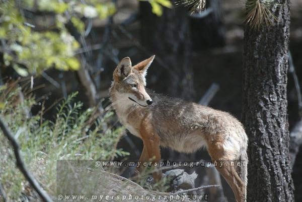 Multiple Southern California Wildlife/Animals