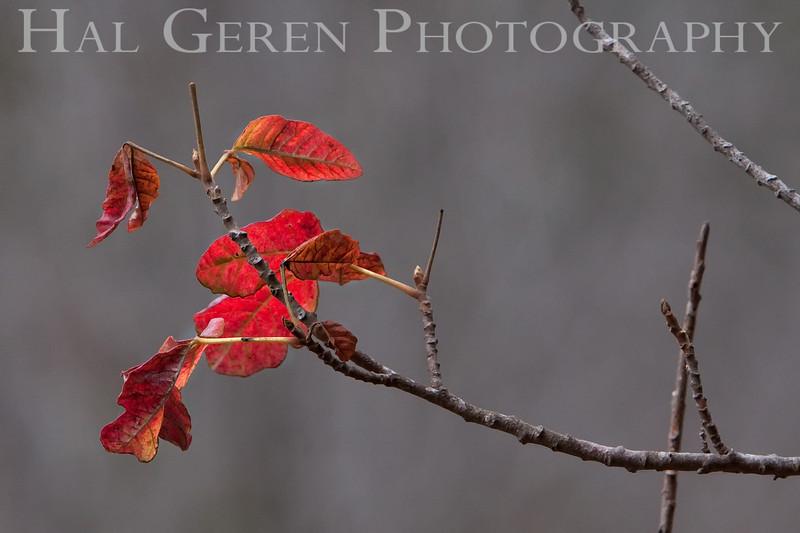 Sunlit Leaves Big Sur, California 0908BS-F2