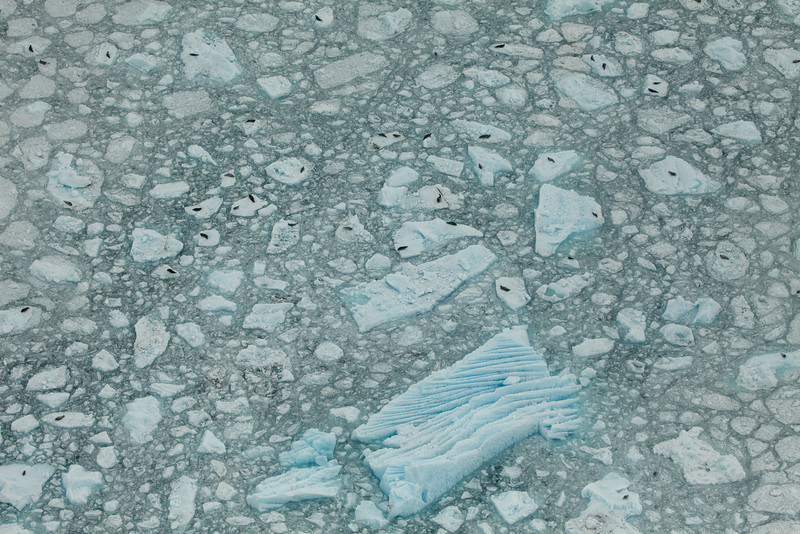 Alaska Icy Bay-3919.jpg