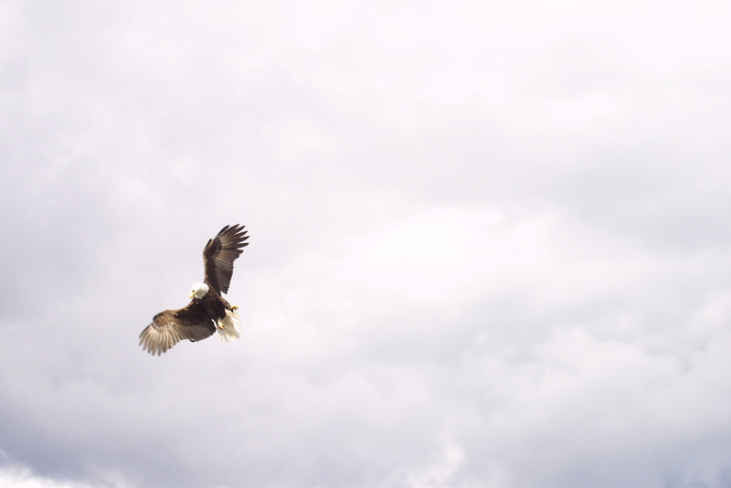 eagles from disc 012.jpg