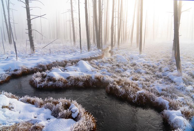 _AR71412 Creek at bobbysox forest.jpg