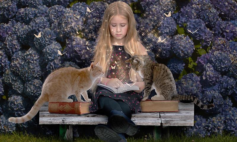 Kimberley Cats sm.jpg