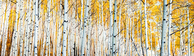 tmophoto_yellow aspen trees hunter creek.jpg