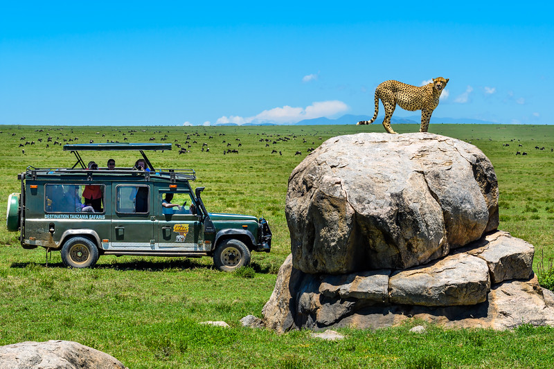 Cheetah Rock.jpg