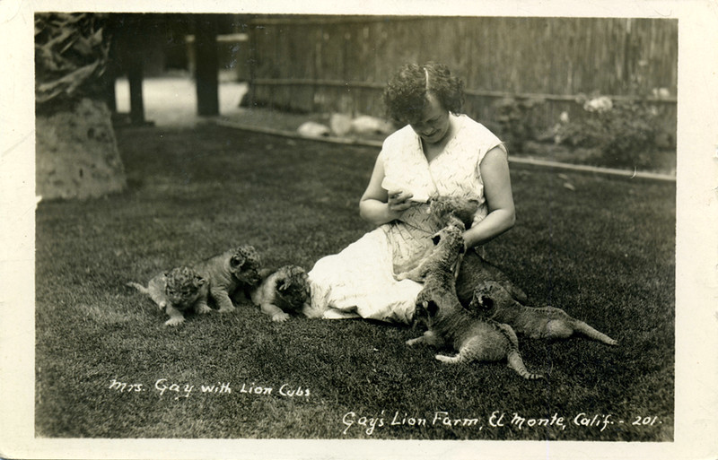 Mrs. Gay With Lion Cubs