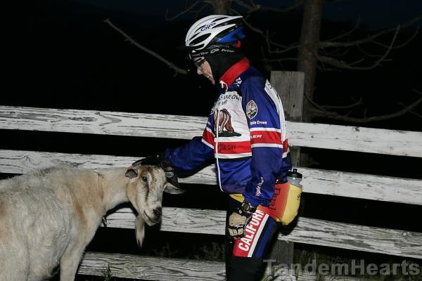 At the mini-reststop beyond Sierra Road, one must take time out to Pet the Goat.