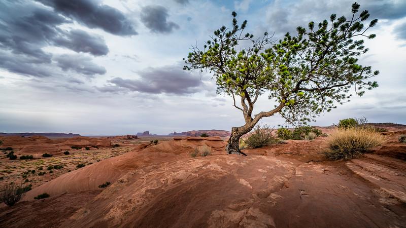 Monument Tree.jpg