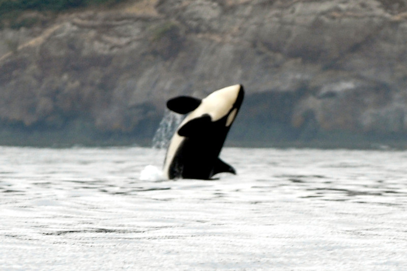 070902 8123B Canada - Victoria - watching killer whales from boat _F _E ~E ~L.jpg