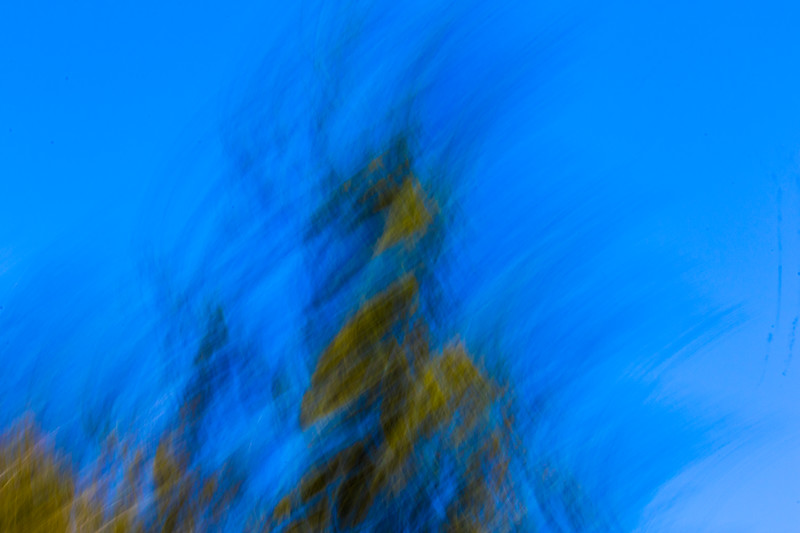 Natural patterns from a tree against a pure blue sky in an abstract photo