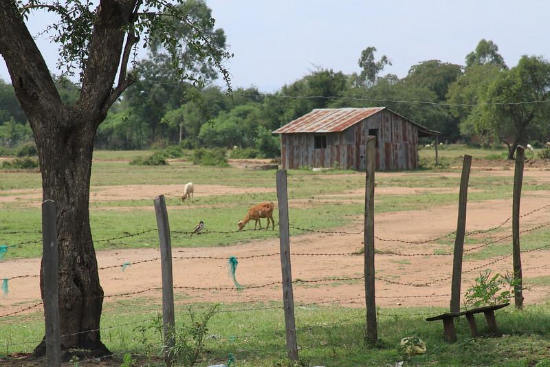 Kenya Part1 '15 1056.JPG