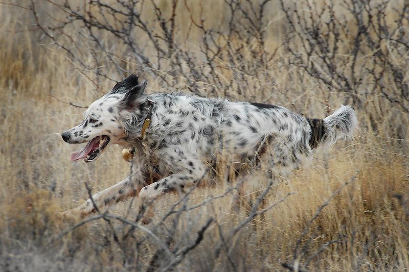 DSC_4251 6x4 Molly-Running.jpg