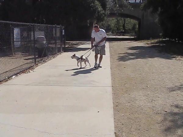 Dog Park 1.mp4