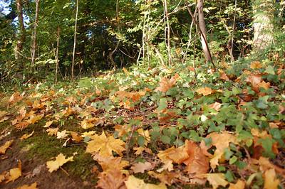 Autumn 11/10/2010