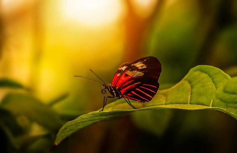 Butterfly-043.jpg