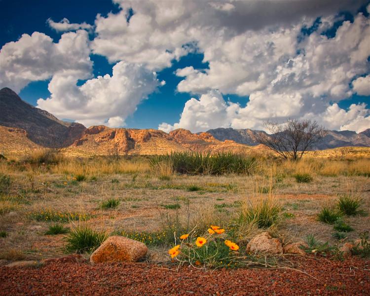 GBarnett_Landscape.jpg
