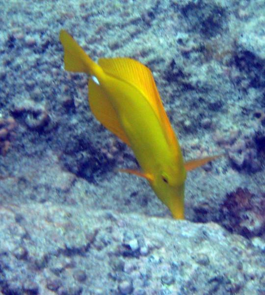 461- 20080416- Hawaii 20-Snorkelling IMG_0650.jpg