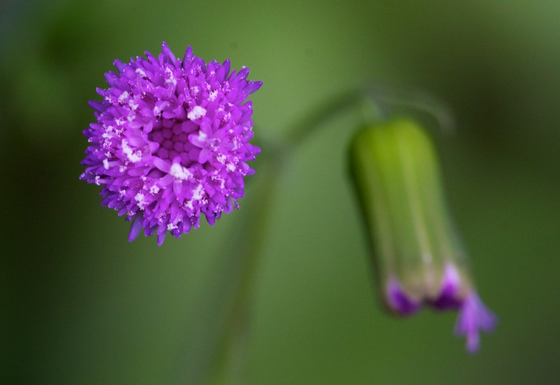 tiny purple wildflower