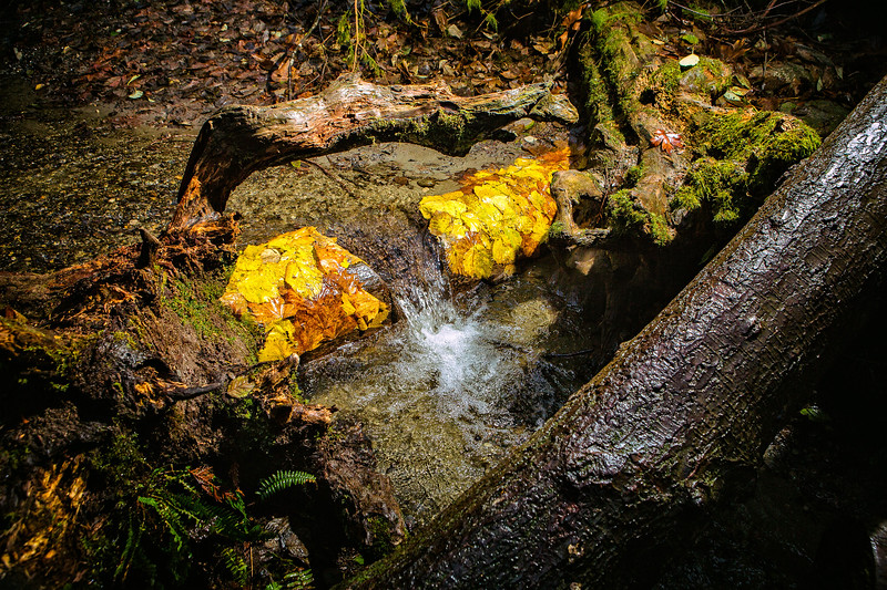On the previous day I discovered the log in the creek covered in yellow leaves, but when I came back most of the leaves had washed away and lost their color. I gathered new leaves from nearby and pasted them to the log.