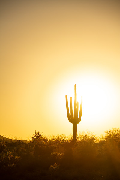 A Warm Desert Sunset Under a Cloudless Sky